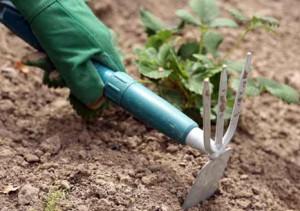 Аэрация (рыхление) почвы повышает ее плодородность