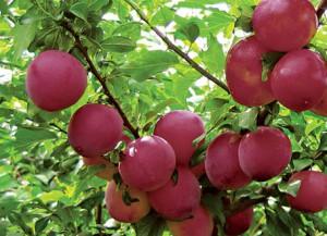 Высокий урожай - результат качественного опыления