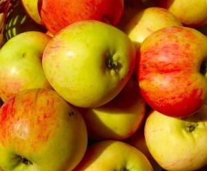 Знаменитый сорт яблок - Антоновка
